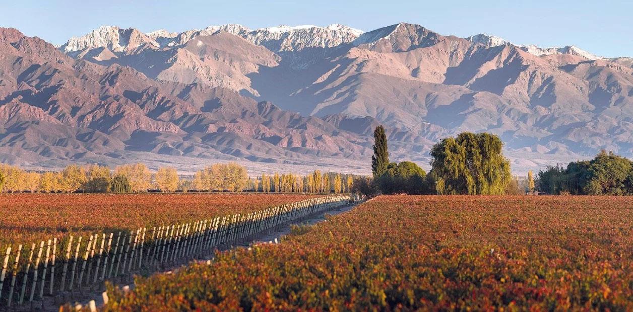 La ruta del vino Mendoza: una escapada ideal para disfrutar del vino y la gastronomía – RomaWine Cj